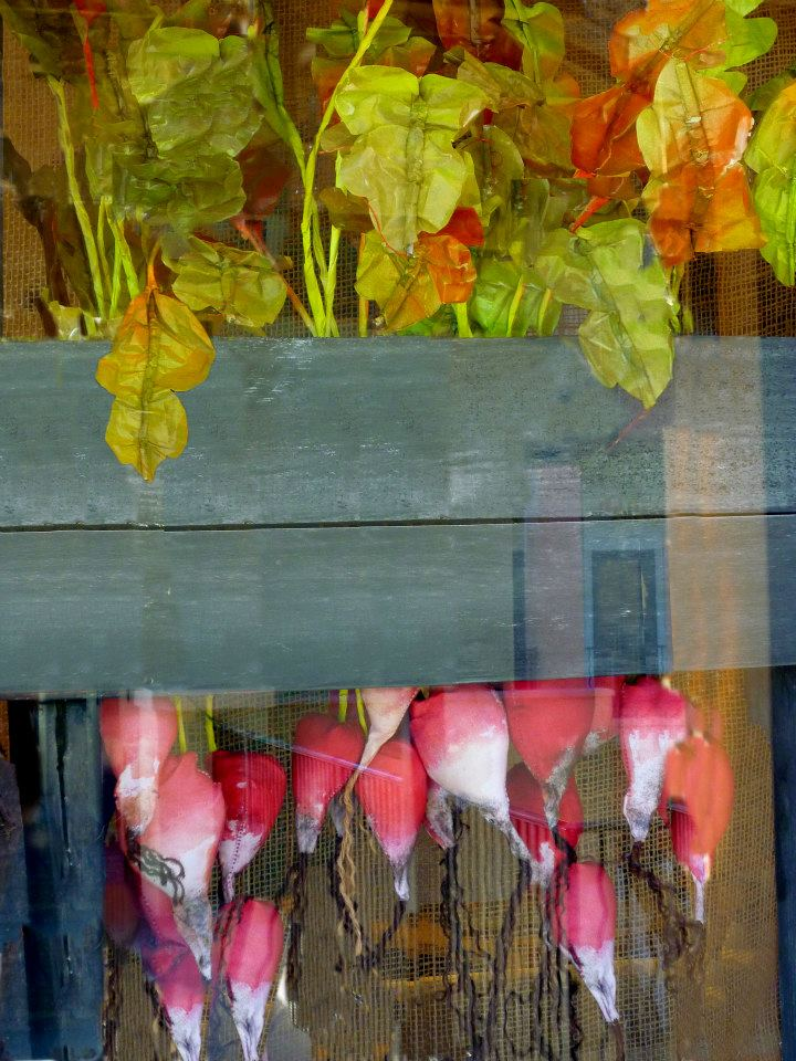 best-window-displays_anthropologie_2013_earth-day_14