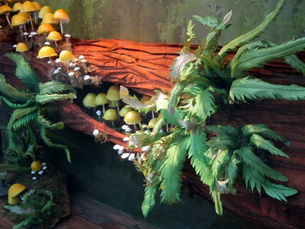 best-window-displays_anthropologie_2013_fall_mushroom_02